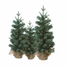 그레이트리35센티 무장식 크리스마스장식나무 믹스트리