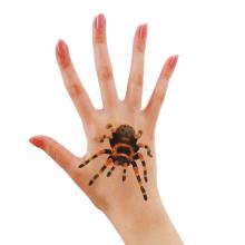 할로윈타투(거미) 스티커 판박이 특수 분장 소품